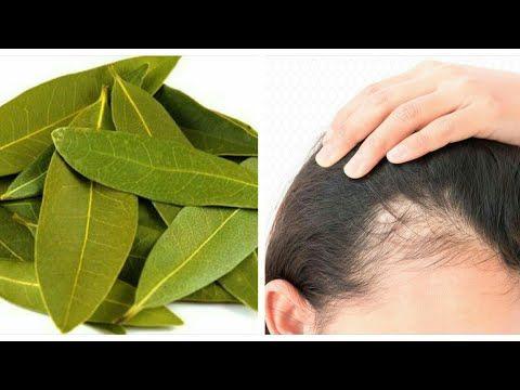 استخدمى ورق الغار لشعرك و انسى الصلع وخفه الشعر نهاااااااأيا Youtube Hair Butters Beauty Care Routine Hair Growth