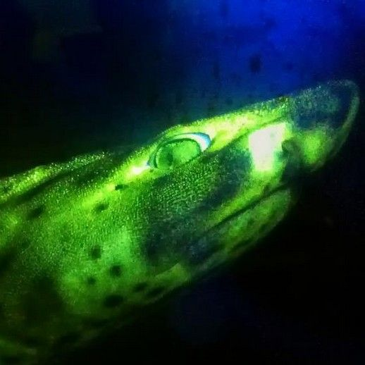 ... in the Dark Sleepover at Oklahoma Aquarium Jenks, OK #Kids #Events