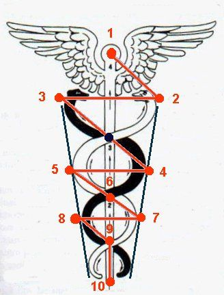 The Cadeuseus Tree=symbol of medical profession, consists of ten spheres (=10 fingers and toes], connected by 22 Paths [=22 Hebrews Letters] symbol of transcendence, which is associated with the god Mercury (the guide of spirits), who is depicted with wings. Consisting of a staff entwined by 2 battling serpents topped by a sphere and wings, both the upward striving and the balancing of opposites; the serpents are creatures confined to the earth and the wings symbolize creatures of the sky.