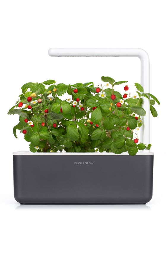 Click Grow Smart Garden 3 Self Watering Indoor Garden Nordstrom Smart Garden Indoor Garden Self Watering