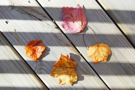 sun stripes and autumn leaves.