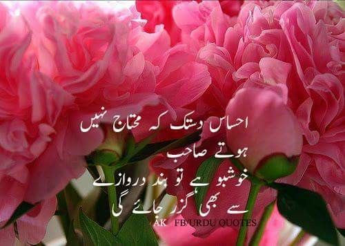 Amna Khan Pink Petals Bloom Blossom Pretty Flowers