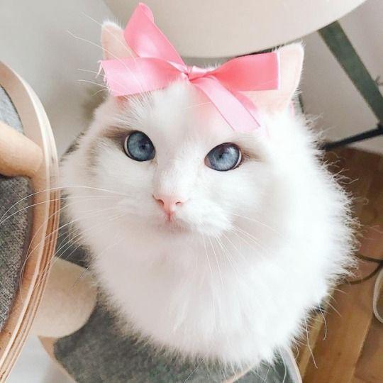 Kittens Tumblr Pet Insurance Cost Cat Illnesses Pet Health