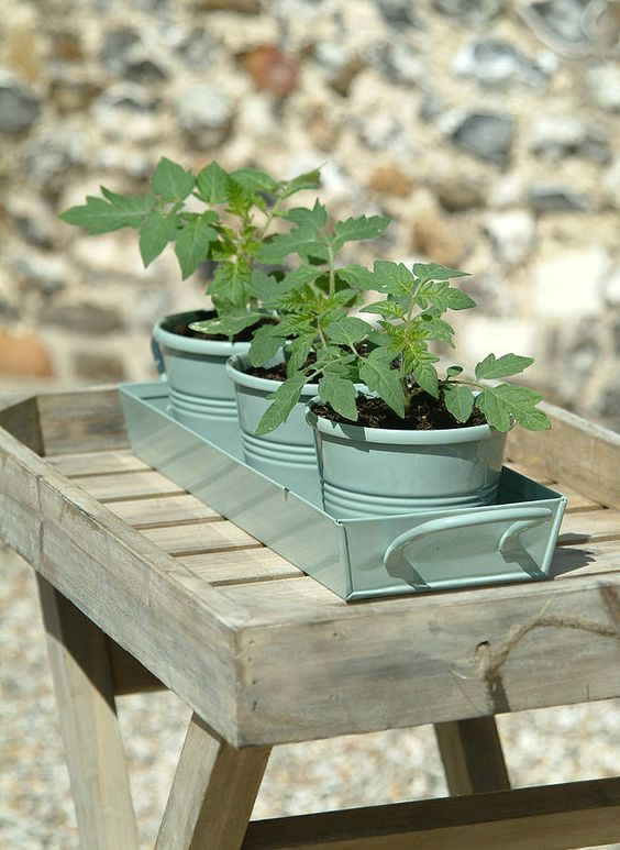 Herb Pots On Tray Shutter Blue