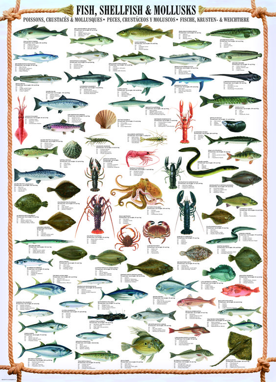 Over 50 fish and fun facts on pinterest for Japanese fish names