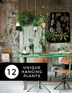 I will do this in my New York City apartment. Nature verses Urban Lifestyle. 12 Unique Hanging Plants for Your Home