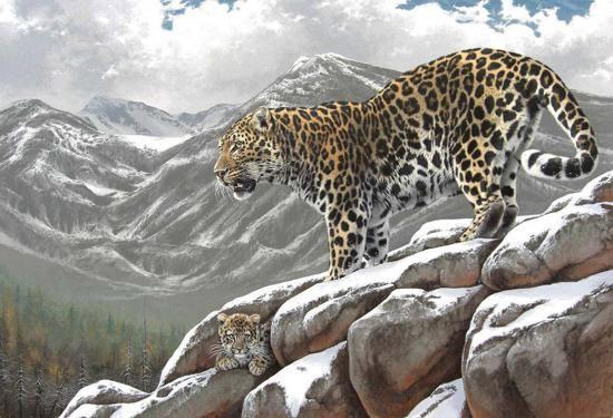 Rock Art Animals   Higher Ground Animal Painting Art