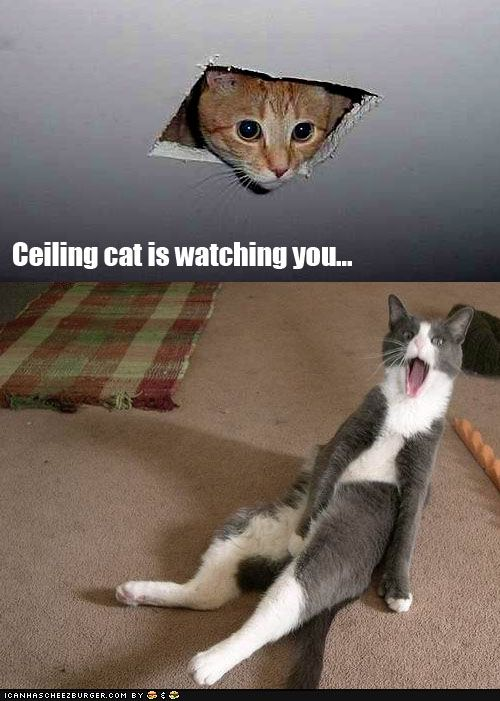 Ceiling Cat Is Watching You Funny Shit Pinterest