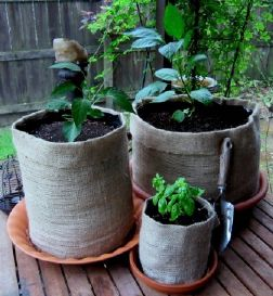 Collapsible easy-to-store Burlap Girdles are perfect for gardening anywhere--from back yard to balcony