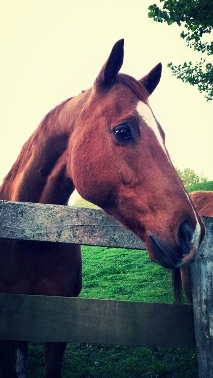 Curious thoroughbred