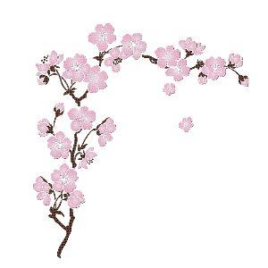 Branche de cerisier en fleur pinterest - Cerisier en fleur dessin ...