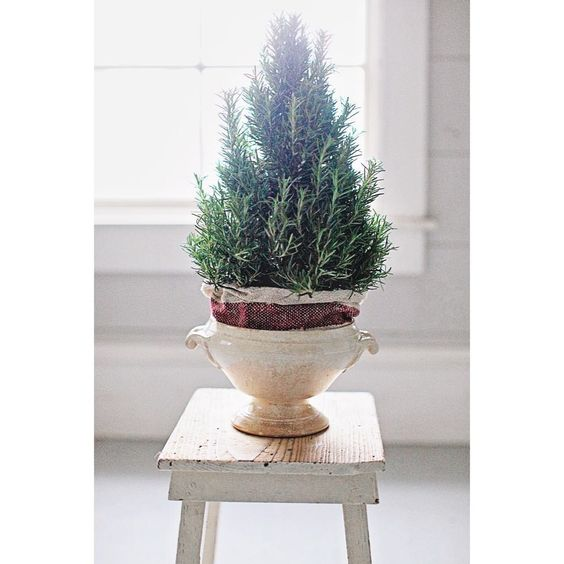 A rosemary tree in a French tureen I found in Provence. The tureen is available in our online shop. A simple way to disguise the pot is to wrap a towel around the base inside the pot. I shared this on my stories a couple weeks ago but wanted to post it here too.