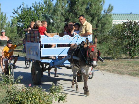 Balade en calèche avec les ânes, ferme pédagogique pour les enfants, authenticité et convivialité sur le camping le Ragis !