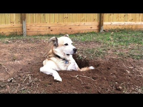 The Longer You Watch The Funnier It Gets Funny Dog Videos