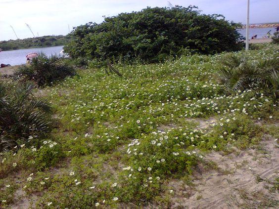 Lagoa de Iriri _ Rio das Ostras, RJ