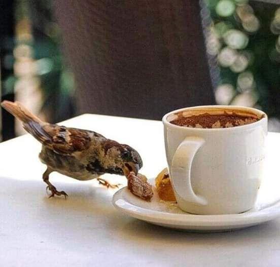 Pin Von Tabitha J Auf Birds Kaffeepause Kaffee Und Guten