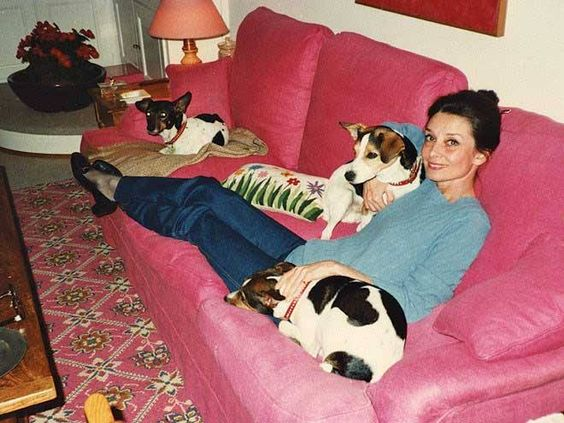 Audrey Hepburn with her Jack Russell terriers, 1987: