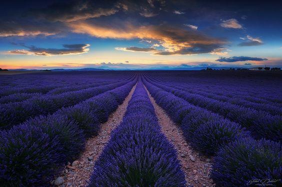 Valensole Plateau, Provence-Alpes-Côte d'Azur, French Riviera