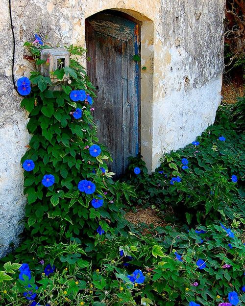 I will have Morning Glories :)