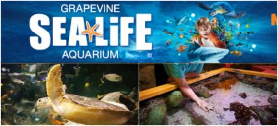 The Dallas Aquarium at Fair Park Coupons, Savings and Zoo Park Description for The Children's Aquarium has been designed with kids in mind. With eye-level, interactive zones and exhibits, everyone can enjoy and learn something new about our aquatic friends from around the world.