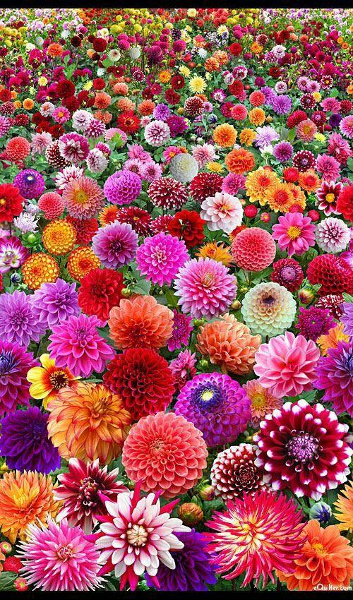 綺麗で美しい花畑のアップ