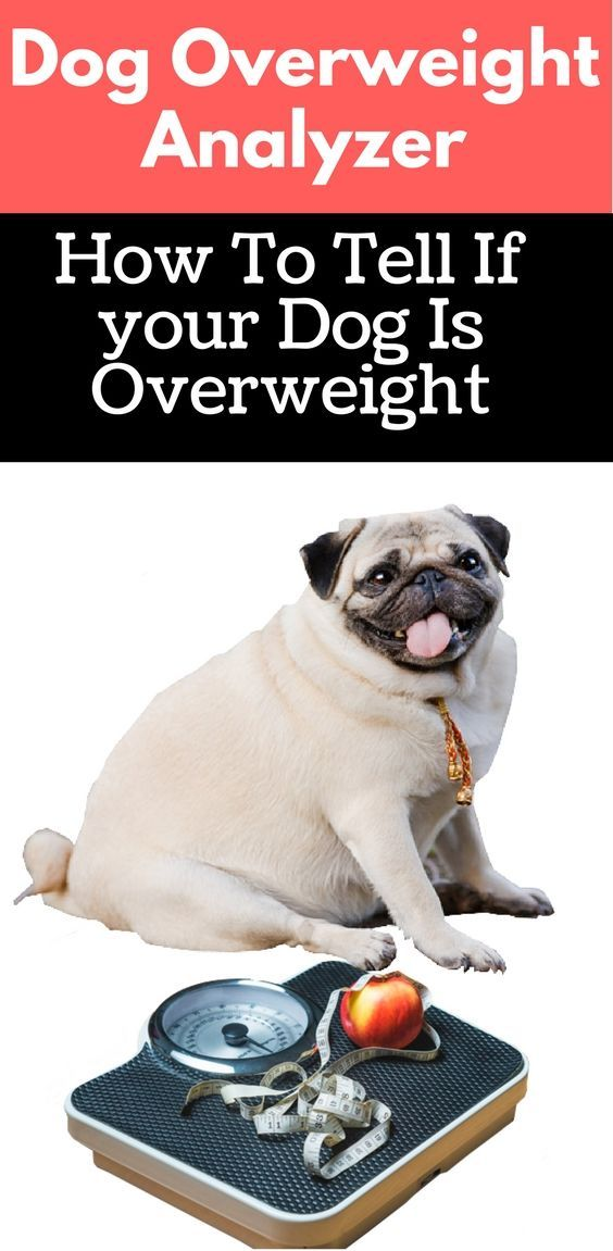 Is My Dog Overweight Easy And Quickly Charts To Know It Dog
