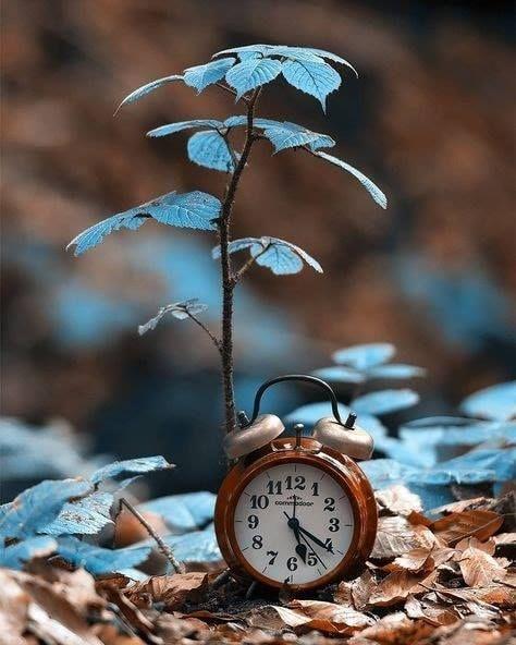Non contare i giorni,  fa in modo che i giorni contino. ~M.Ali'~