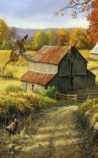 Pheasant flying over Barn: