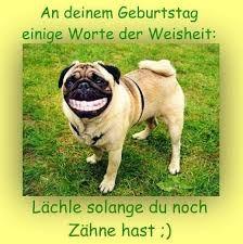 Bildergebnis Fur Alles Liebe Zum Geburtstag Tiere Hund Lachelnd