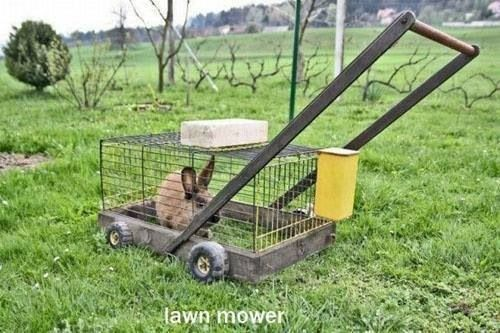 Get this for me and I will mow the lawn.