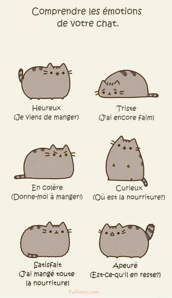 Comprendre les émotions de votre chat - & learn some new French words today - nourriture, manger, faim