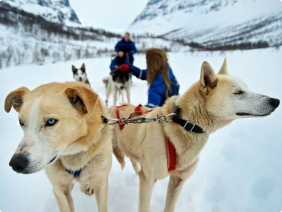 Tromso and the Lofoten Islands Northern Lights Holiday