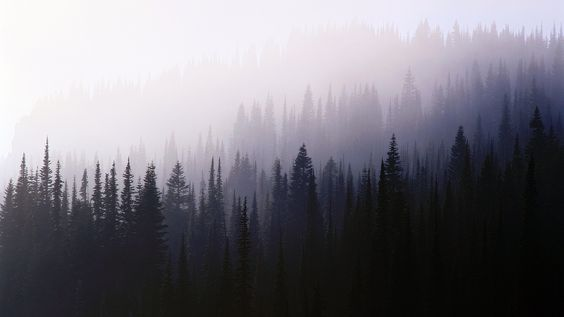 forest, Trees, Nature, Mist Wallpaper