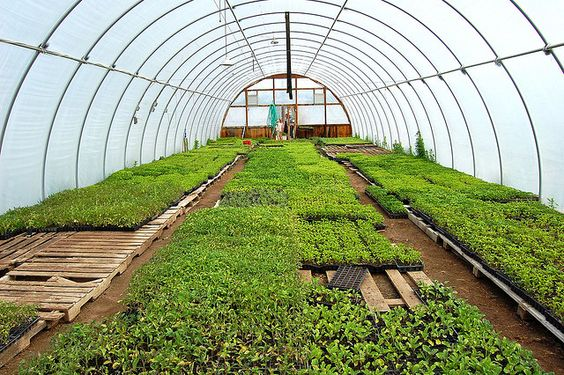 High tunnel at Thorpe's Family Organic Farm by OrganicNation, via Flickr