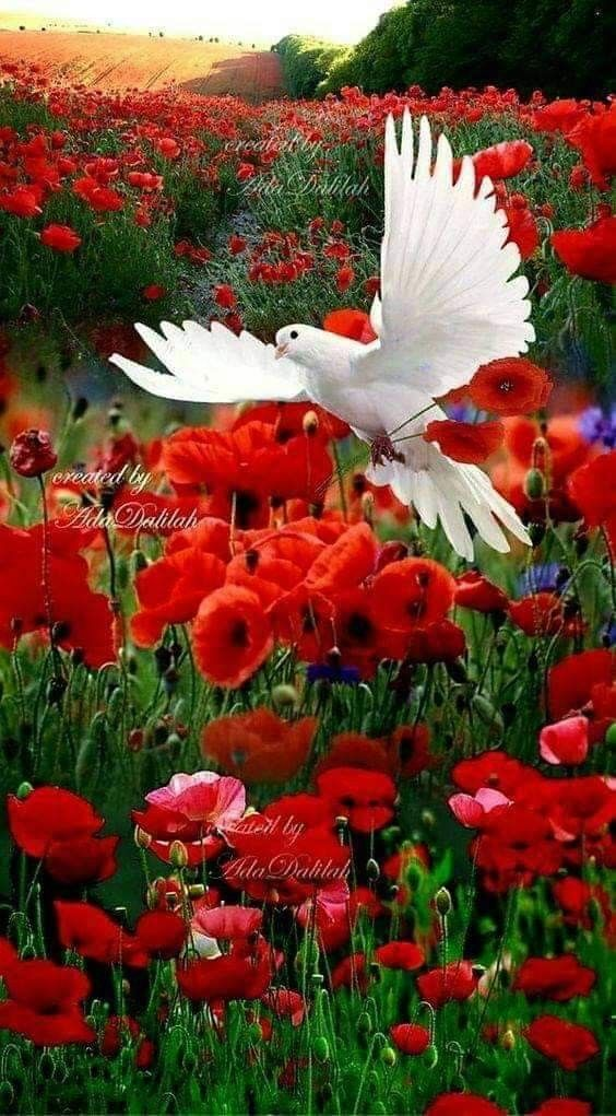 Pin By Qaisar Shah On Doves Are Beautiful Very Beautiful Flowers Beautiful Flowers Beautiful Nature
