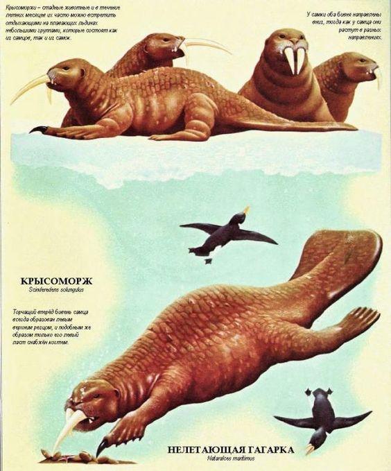 Zoología del futuro o el mundo después de hombre