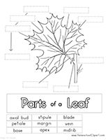 Free Parts of a Leaf Printables, worksheets, coloring