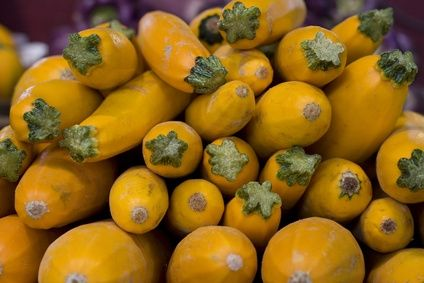 The Best Way to Put Up Squash in Freezer Bags
