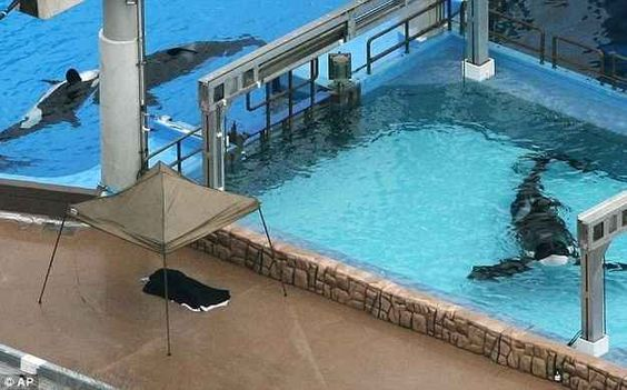 animal captivity speech In the wild, killer whales vie for dominance but the subdominant animal then flees  the scene and the conflict subsides in captivity no one gets to.