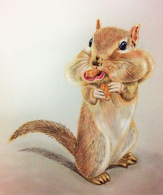 猜猜我嘴巴塞了多少顆杏仁果? #art #illustration #color #painting #chipmunk #animal