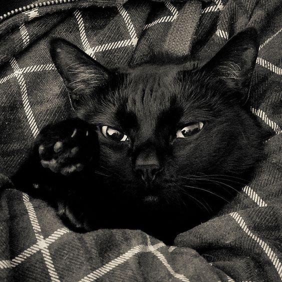 Los gatos negros son generalmente más tranquilos que los blancos, que están siempre muy nerviosos.: