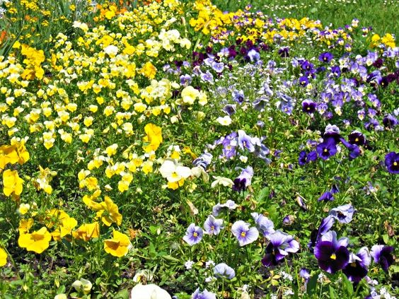 Green your gardening and lawn care with Epsom Salt instead of ...