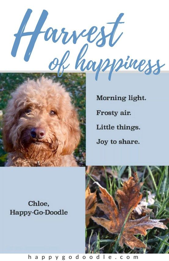 Feel Good Quotes About Fall And Dogs A Harvest Of Happiness Feel Good Quotes Autumn Quotes Dog Quotes