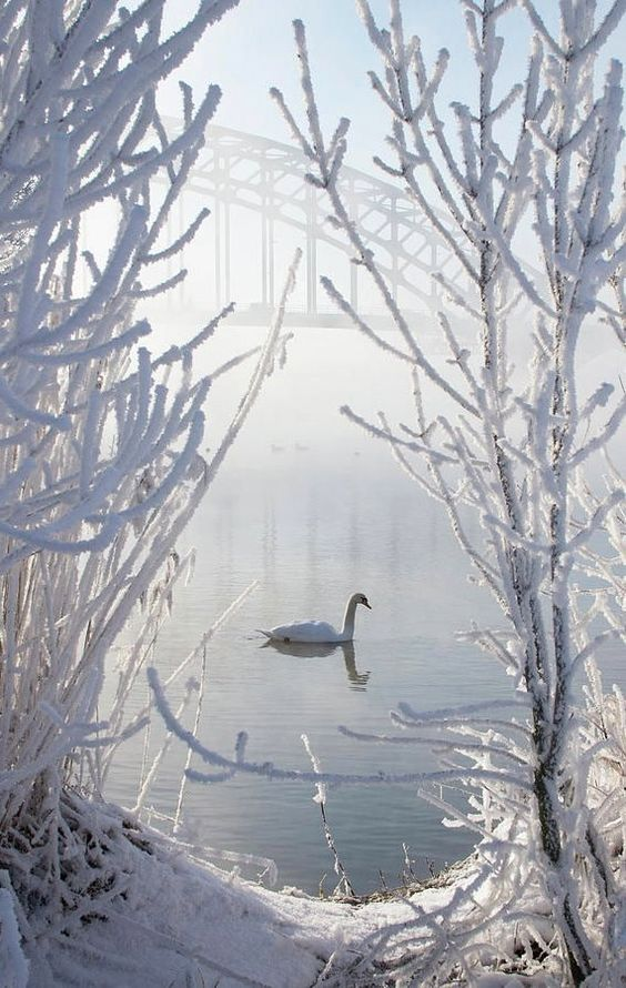 Winter Swan.. | by E.M. van Nuil: