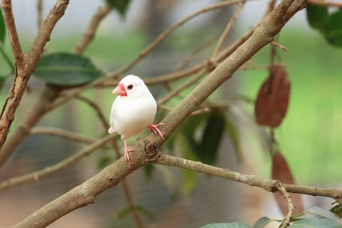 文鳥かわいい おしゃれまとめの人気アイデア Pinterest こんこん ペットの鳥 ペット 文鳥