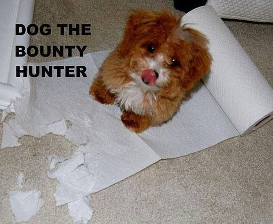 Dog the Bounty Hunter  Lol