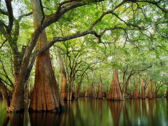 #Forest #CypressSanctuaryPaulMarcellin International Garden photographer of the year | Awe-inspiring images celebrate the humble garden | News.com.au