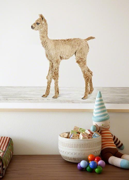 Decorar con fotos de animales la habitaci n del beb for Organizacion de la habitacion del bebe