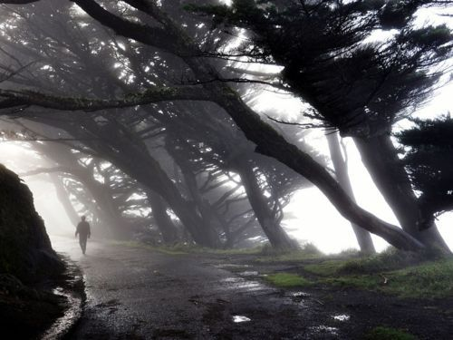 Point Reyes, California. There is nothing like watching the elk come out of the mist in the evening.
