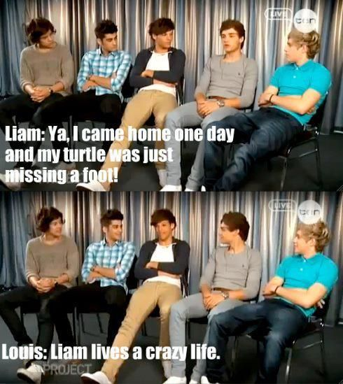 I love this interview, I always say this to my best friend whenever she talks about her turtle!!